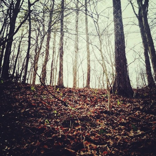 explore // (Taken with instagram)