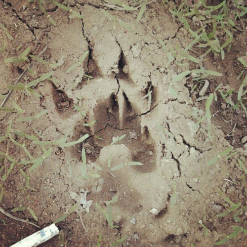 Animal (Taken with instagram)