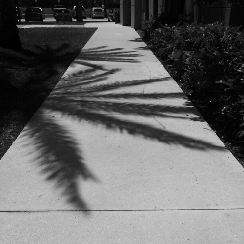 Palm shadow #shadow  (Taken with instagram)