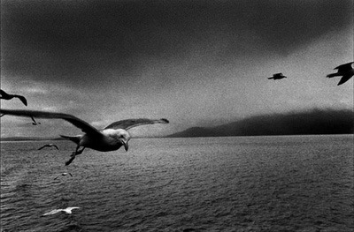 Beautiful gull photo by Josef Koudelka