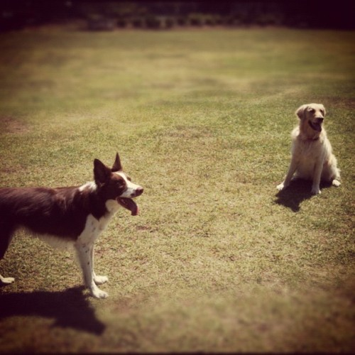 Jack and his new friend Bella :) (Taken with instagram)