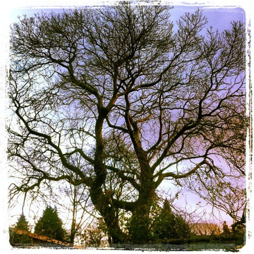 Branching out #tree (Taken with Instagram at Broadway Park)
