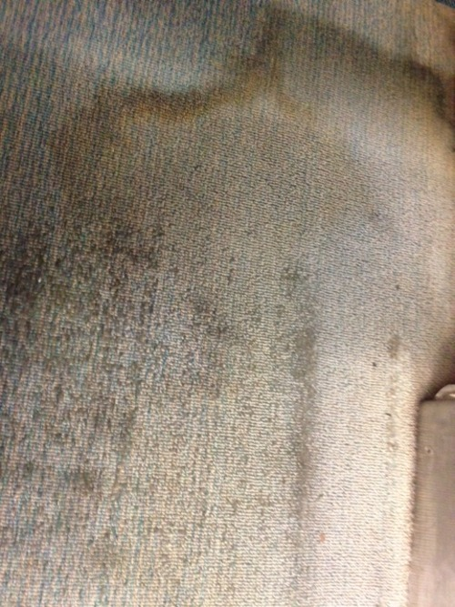 There's nothing like the musty smell of dirty BART carpet on a rainy morning.
