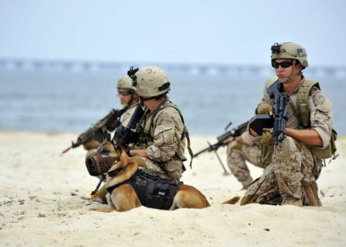 Do military dogs have titanium teeth? Read more here!
