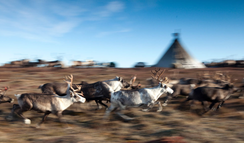 Photographer Steve Morgan traveled to the Yamal Peninsula to document the Nenets, an indigenous people native to Siberia and their threatened way of life.