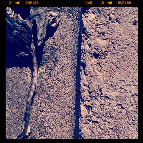 Death in the garden (Taken with instagram)