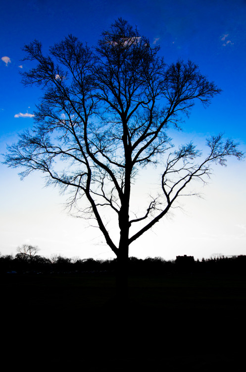 Tree Silhouette I took this picture last week in the park by my apartment in New Brunswick.  I took a few different pictures of this tree but I liked the editing on this one the best because I was able to really bring out the blues of the sky, create a strong silhouette of the tree and have a sharp horizon line in the background.