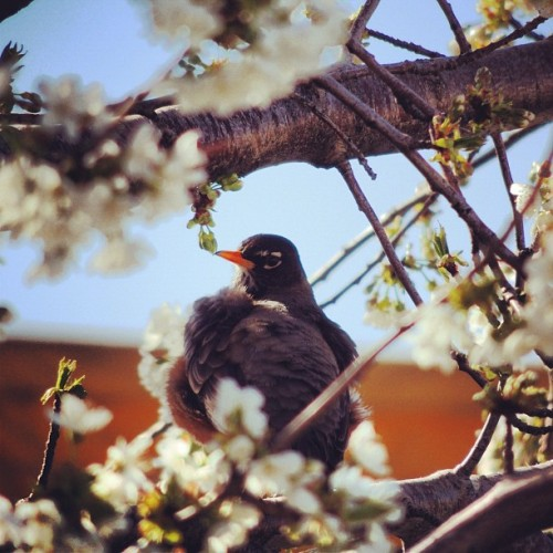 #bird #tree #branch #sky #roof #orange #blue #white #flowers #colorful #light #vibrant #perched #animal #feather #wing #day #afternoon #bloom #spring  (Taken with instagram)