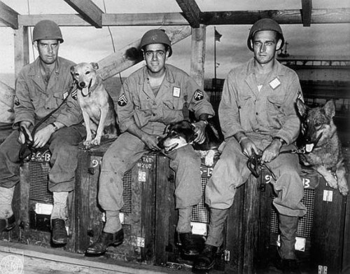 K-9 Unit, Hampton Roads Military Police, World War II.