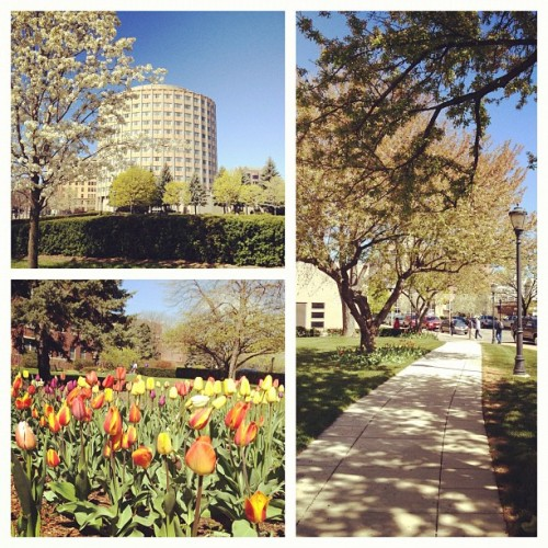 Scenes of spring from Father Marquette, our campus explorer.