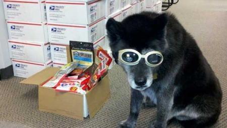 Care packages shipped to military working dogs. Read more here