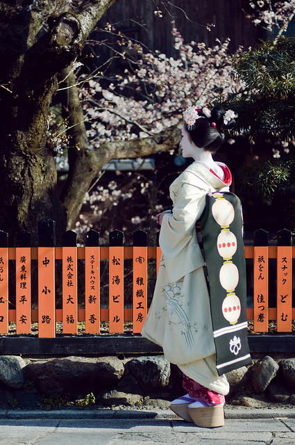 Mameharu-san staring at the sakura (Kyoto, Japan) by marcusuke on Flickr.
