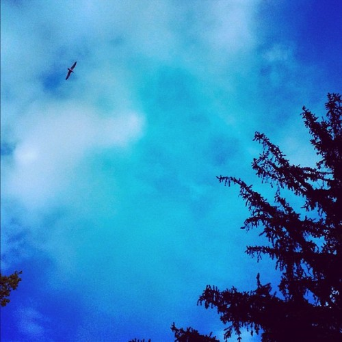 #sky #seagull #bird #tree #clouds #popular #iphone #iphoto #instagram #iphoneography #instagood #iphone4s  (Taken with instagram)