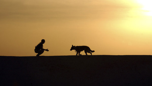 A military working dog and his handler spend time together. STK105404M | © Stocktrek Images, Inc.