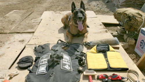 A military police dog sits beside his issued protective gear. STK105438M | © Stocktrek Images, Inc.
