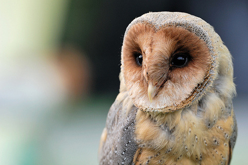 owls are like ghosts. I love them. My favourite animal always