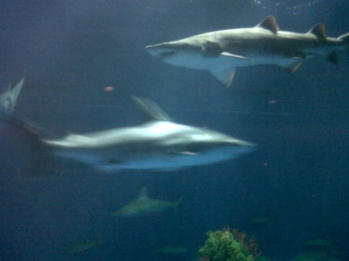 Sea world sharkssss