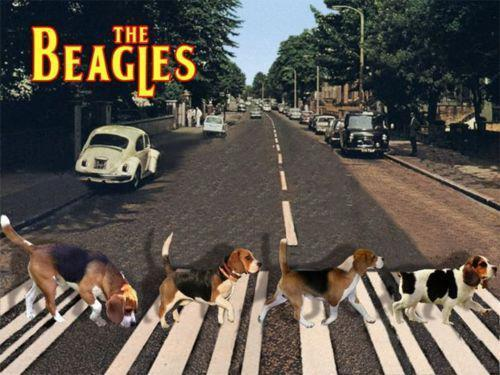 Abbeagle Road