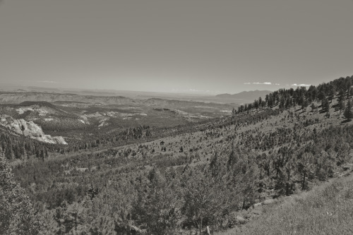 ROAD TRIP image no. 380 Dixie National Forest, near Keller Knoll, Utah June 30th, 2011 Mark Peter Drolet + click through to see larger