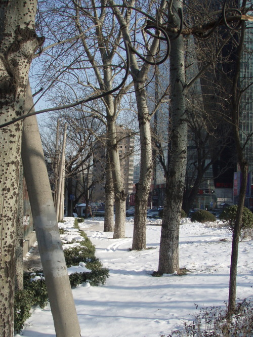 Winter street in Beijing, China