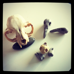 Crow and cat skulls, teeth.. i carved for necklaces.
