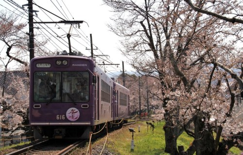 satoyumi:  The train running in a tunnel of cherry blossoms between Narutaki and Utano station in Kyoto of Japan. 鳴滝~宇多野間の桜のトンネルを走る嵐電。