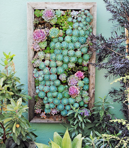 fancybidet:  Argh this vertical succulent wall piece kills me! I have to replicate it in our garden!