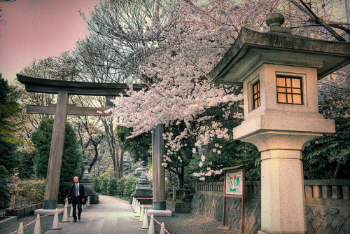 Harajuku Shrine Sakura by tokyofashion on Flickr.