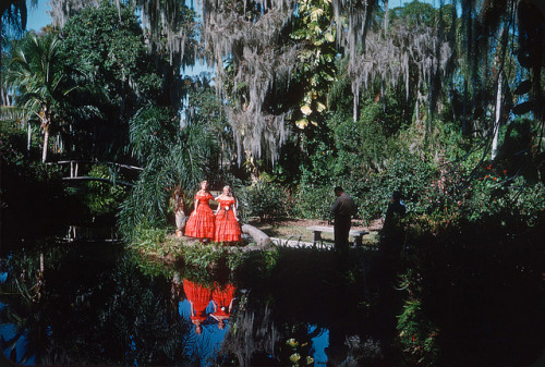oldflorida:  I'd rather pose in the moss, 1952. (via ElectroSpark on Flickr.)