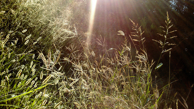 Morning in the Meadow on Flickr.A beautiful morning light hit some grasses in a peaceful meadow amongst the early tranquility of the day's beginning.