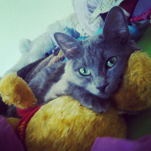 My cat is gorgeous <3  (Taken with instagram)