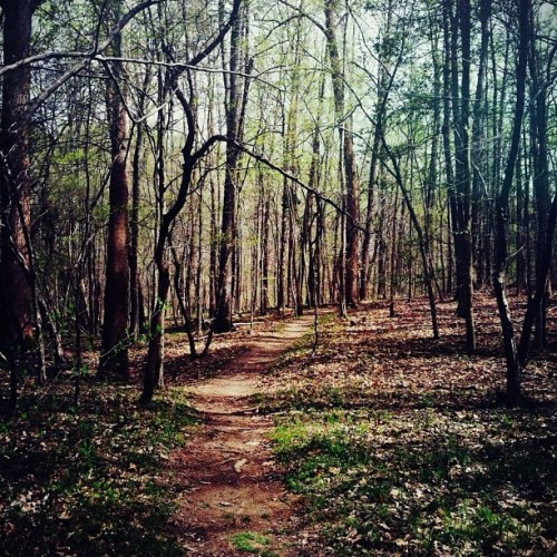 deep dark forest. (Taken with instagram)