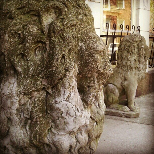 Faceless lions (Taken with instagram)