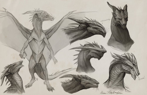 fuckyeahdragons:  Sapient Dragon Sketches by ~KatePfeilschiefter