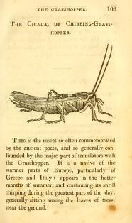 From Anecdotes of remarkable insects: selected from natural history, and interspersed with poetry by Joseph Taylor (1817)  To the Grasshopper.   Happy Insect ! blithe and gay  Seated on the sunny spray,  And drunk with dew, the leaves among, Singing sweet thy chirping song.   All the various season's treasures,  All the products of the plains,  Thus lie open to thy pleasures,  Fav'rite of the rural swains.   On thee, the Muses fix their choice,  And Phoebus adds his own.  Who first inspir'd thy lively voice.  And tun'd the pleasing tone.   Thy cheerful note in wood and vale  Fills every heart with glee ;  And summer smiles in double charms  While thus proclaim'd by thee.   Like Gods canst thou the Nectar sip,  A lively chirping elf;  From labour free, and free from care,  A little God thyself!