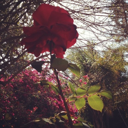 losmadden:  In my garden (Taken with instagram)