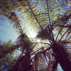#spring #scenery #nature #zoo #arizona #palmtrees  (Taken with instagram)