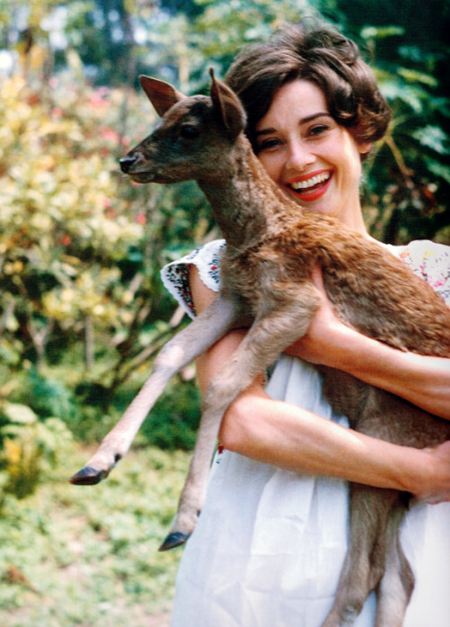 Audrey Hepburn and her pet fawn Pippin.  Photograph by Bob Willoughby, 1958. scan by rareaudreyhepburn from the book Audrey 100.