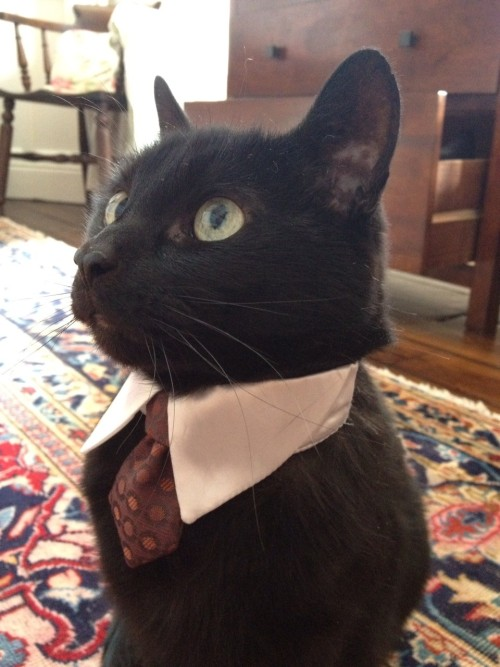 Ok, ready for your profeccional interview, Mr uhmmm cat(?) Ah, I see you're an quiet one there Mr cat. ouo