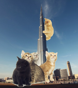the Purrj Khalifa