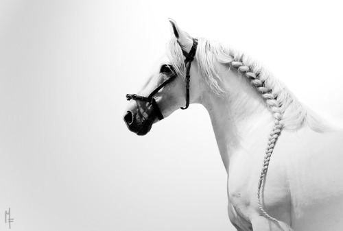black-and-white:  once upon a time there was a fairytale horse… | by Chamfron