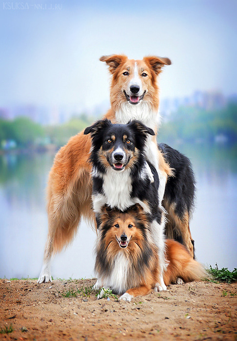 theanimalblog:  dog pyramid | by Ksuksa-Raykova  :3
