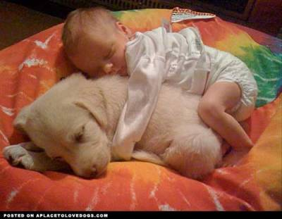 trungles:  aplacetolovedogs:  imgur Big spoon, little spoon cuddling Original Article  WHAT. WHAT. WHAT. My heart…