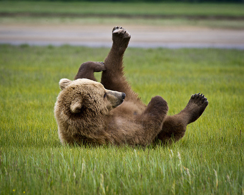 funkysafari:  Lounging Around, Alaska by MommaD