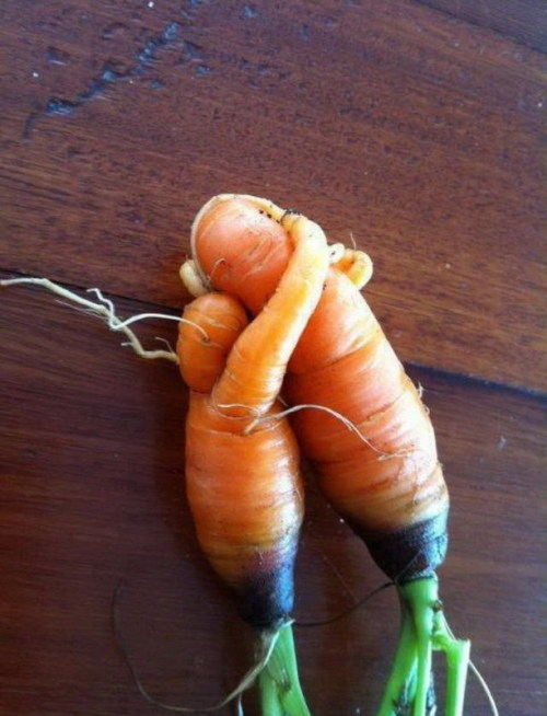 Proof: Carrots are bawdy