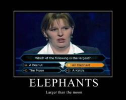 Elephans, bigger than the moon…. her logic is floorless…
