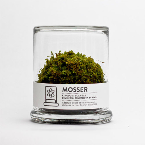 MOSSER scientific glass moss terrarium and spray by themosserstore 西洋的苔玉