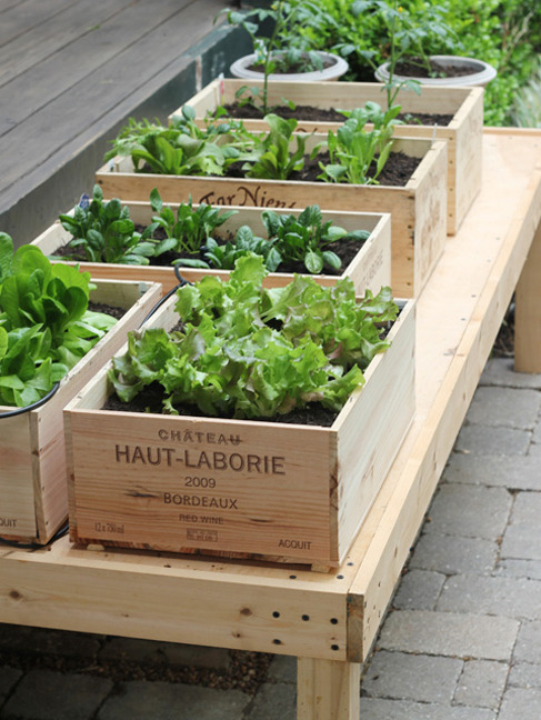 mermay:  scout:  Edible Gardening in Small Spaces | The Small Garden  Love the wine box garden!  I love any non-conventional garden!