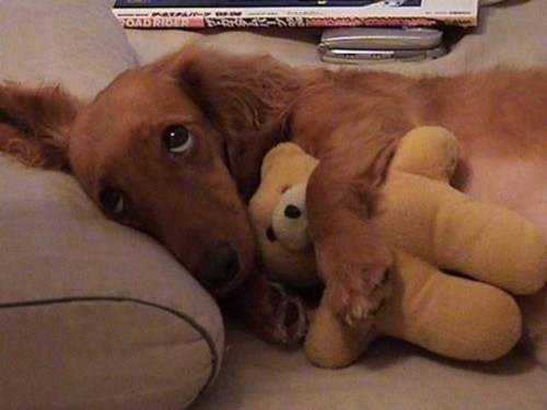animalswithstuffedanimals:  Good night bear.