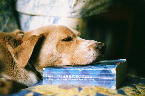 neartt:  harry potter and puppy